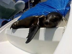 1-Seal